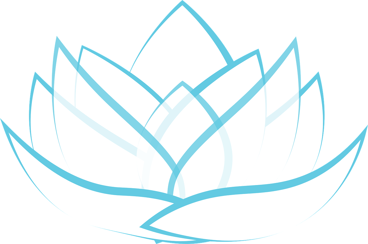 lotus, transparent, blossom